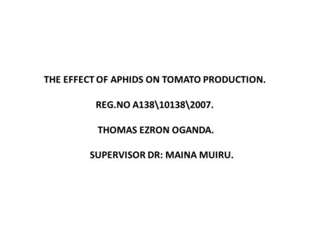 THE EFFECT OF APHIDS ON TOMATO PRODUCTION. REG.NO A138\10138\2007. THOMAS EZRON OGANDA. SUPERVISOR DR: MAINA MUIRU.