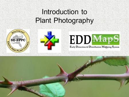 Introduction to Plant Photography. Purpose Being able to use photographs to identify the species adds validity to the data collected and entered into.