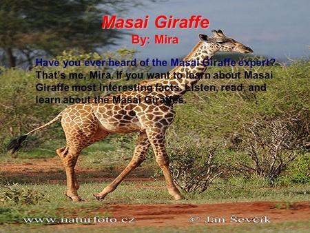 Masai Giraffe By: Mira Have you ever heard of the Masai Giraffe expert? That's me, Mira. If you want to learn about Masai Giraffe most interesting facts.