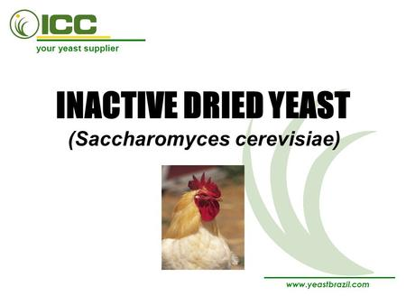 Your yeast supplier www.yeastbrazil.com INACTIVE DRIED YEAST (Saccharomyces cerevisiae)