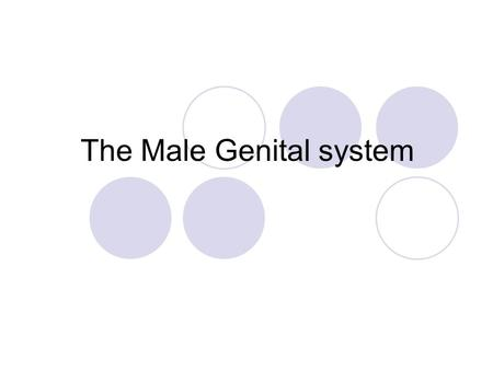 The Male Genital system. Contents Penis Testis Prostate.