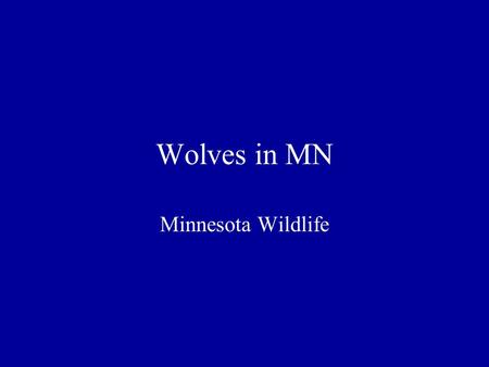 Wolves in MN Minnesota Wildlife. Physical Characteristics Conformation –Largest member of dog family –Weight – adult males 95-100 lbs., females 80-85.