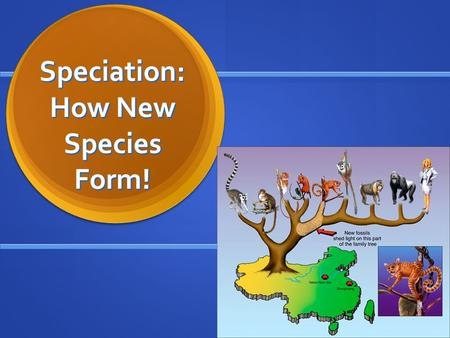 Speciation: How New Species Form!. April 5 Warm-Up: How does a species form? Warm-Up: How does a species form?