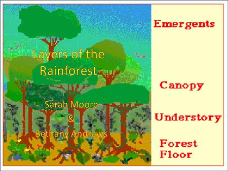 What makes a cake a cake? What parts of a cake are important to us? How is a tropical rainforest like a cake?