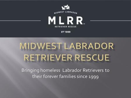 Bringing homeless Labrador Retrievers to their forever families since 1999.