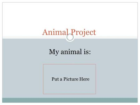 Animal Project My animal is: Put a Picture Here. Which animal group is your animal in, and what is it's scientific name?