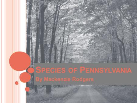 S PECIES OF P ENNSYLVANIA By Mackenzie Rodgers. E NDANGERED S PECIES Definition: a plant or animal species existing in such small numbers that it is in.