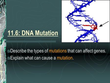 11.6: DNA Mutation Describe the types of mutations that can affect genes. Explain what can cause a mutation.