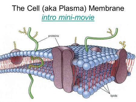 The Cell (aka Plasma) Membrane intro mini-movie intro mini-movie.