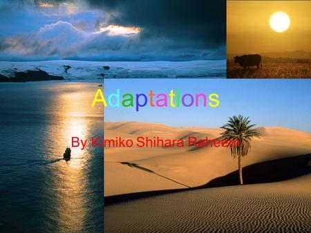 Adaptations By Kimiko Shihara Raheem. Adaptation is when an organism must have certain qualities which help them adjust to their environmental conditions.