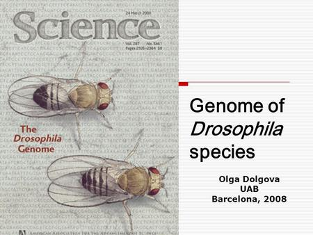 Genome of Drosophila species Olga Dolgova UAB Barcelona, 2008.