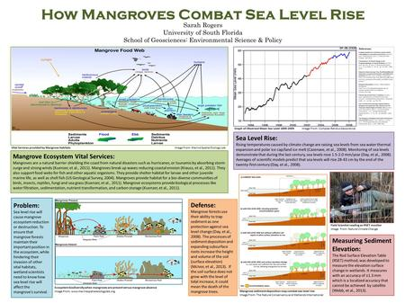 How Mangroves Combat Sea Level Rise Sarah Rogers University of South Florida School of Geosciences: Environmental Science & Policy Defense: Mangrove forests.