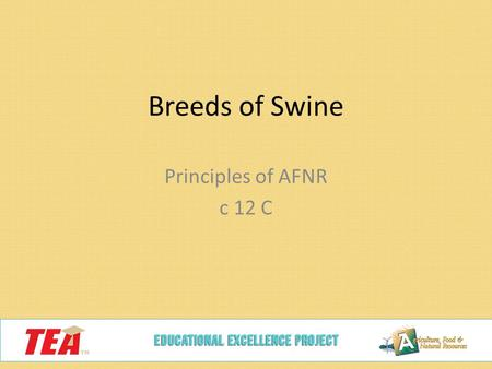 Breeds of Swine Principles of AFNR c 12 C. Landrace Originated in Denmark Drooped ears Known for their maternal instincts White Know for long bodies Flatter-topped.