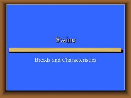 Swine Breeds and Characteristics. Terms  Sow – Mature female hog  Gilt – Young female hog  Boar – Male hog  Barrow – Castrated male hog  Farrow –
