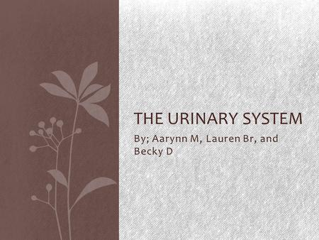By; Aarynn M, Lauren Br, and Becky D THE URINARY SYSTEM.
