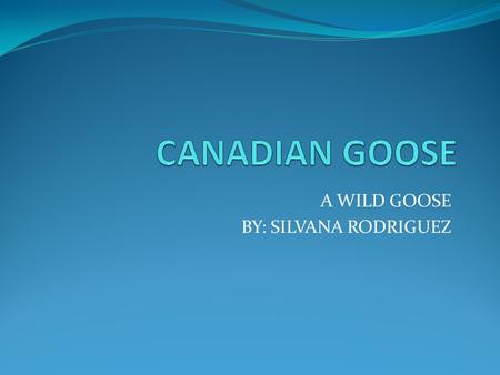 A WILD GOOSE BY: SILVANA RODRIGUEZ INTRODUCTION The family is Anataide The species is Canadensis The scientific name of the canadian goose is Branta.