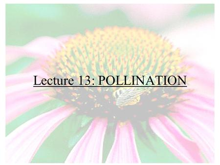 Lecture 13: POLLINATION. What is pollination? Pollination: The transfer of pollen from the male anther to the female stigma.
