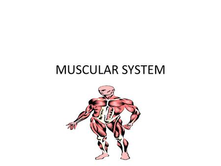 MUSCULAR SYSTEM. WHAT DOES THE MUSCULAR SYSTEM DO? ACCOUNTS FOR ALL OF THE WAYS THAT THE PARTS OF THE BODY MOVE. ACTIONS SUCH AS RUNNING,EATING,BREATHING,DIGESTING.