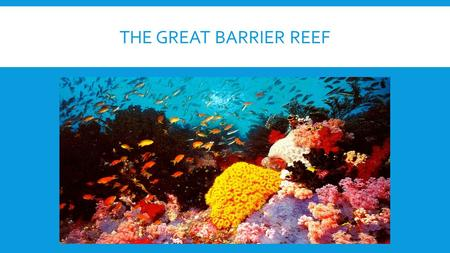 THE GREAT BARRIER REEF. ABOUT World's largest coral reef system. The Coral Sea, off the coast of Queensland, Australia. Around 2600 kilometres in length.