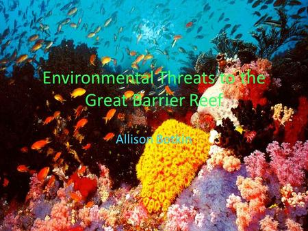 The Great Barrier Reef and the Environment and Social Impacts of Tourism Essay Sample