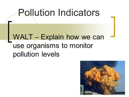 WALT – Explain how we can use organisms to monitor pollution levels Pollution Indicators.