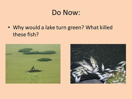 Do Now: Why would a lake turn green? What killed these fish?