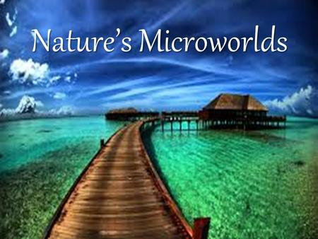 Nature's Microworlds. The Sunlit Zone The sunlight zone contains most of the oceans' plant and animal life. Here you can find a wide variety of plants.