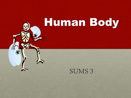 Human Body SUMS 3. Kit Objectives  Observe and investigate the human skeletal and muscle systems.  Become aware of the versatility of movement provided.