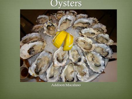 Oysters Addison Macaluso.