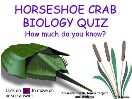 HORSESHOE CRAB BIOLOGY QUIZ How much do you know? Click on to move on or see answer. Presented by Dr. Nancy Targett and students N. Lopanik.