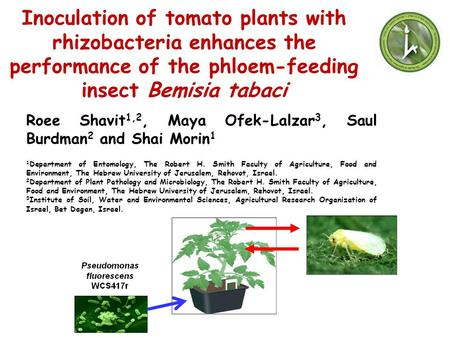 Inoculation of tomato plants with rhizobacteria enhances the performance of the phloem-feeding insect Bemisia tabaci Roee Shavit1,2, Maya Ofek-Lalzar3,