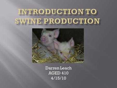 Darren Leach AGED 410 4/15/10 A. History of Swine Production 1. 4900 B.C. domesticated in China, 1500 B.C. in Europe 2. America's first hogs came in.