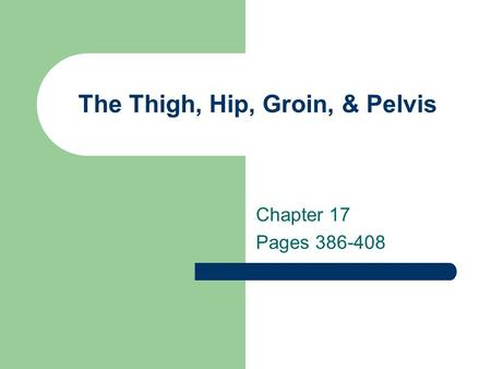 The Thigh, Hip, Groin, & Pelvis Chapter 17 Pages 386-408.