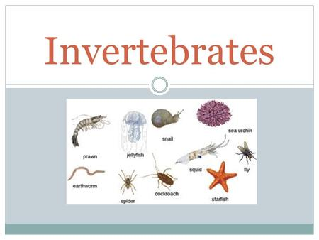 Invertebrates. Introductory Video Lesson 3.1 God's Design of Invertebrates Objective: Students will classify animals as vertebrates or invertebrates.