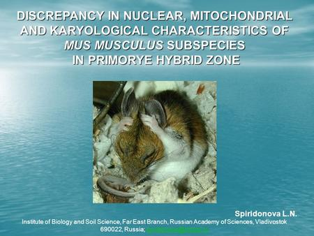 DISCREPANCY IN NUCLEAR, MITOCHONDRIAL AND KARYOLOGICAL CHARACTERISTICS OF MUS MUSCULUS SUBSPECIES IN PRIMORYE HYBRID ZONE IN PRIMORYE HYBRID ZONE Spiridonova.