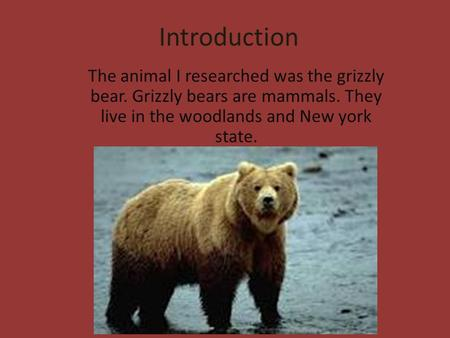 Introduction The animal I researched was the grizzly bear. Grizzly bears are mammals. They live in the woodlands and New york state.