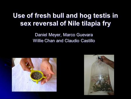 Use of fresh bull and hog testis in sex reversal of Nile tilapia fry Daniel Meyer, Marco Guevara Willie Chan and Claudio Castillo.