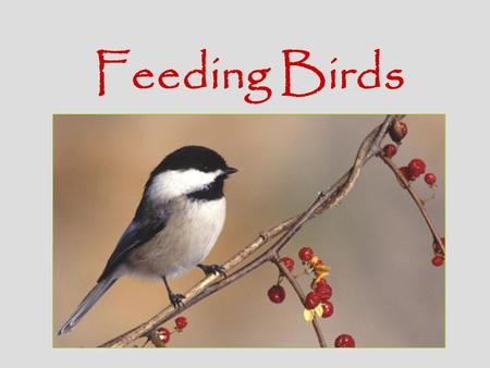 Feeding Birds. Bird Feeder Basics Multiple Feeders - Place different types of feeders with different types of food at different levels to attract a variety.