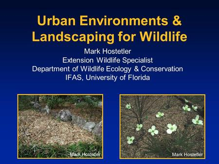 Urban Environments & Landscaping for Wildlife Mark Hostetler Extension Wildlife Specialist Department of Wildlife Ecology & Conservation IFAS, University.
