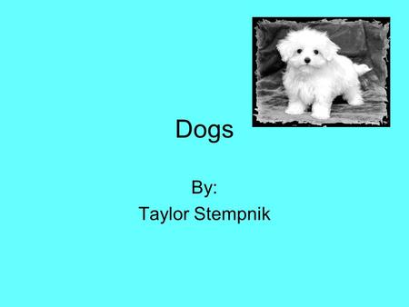 Dogs By: Taylor Stempnik. There are many dogs in the world that need a home. There are approximately 5,000,000 to 7,000,000 animals that are adopted into.