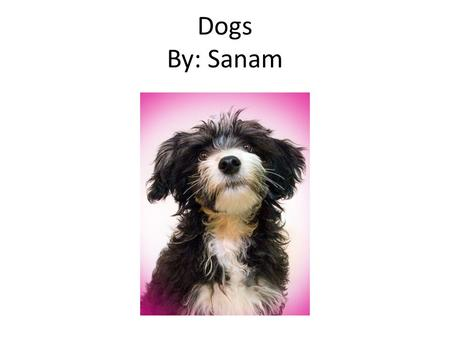 Dogs By: Sanam. Table of Contents pages Introduction…………………………………..…3 Chapter 1 What Are Dogs……………….…4 Chapter 2 Eating Right…………………….…5 Chapter 3 How.