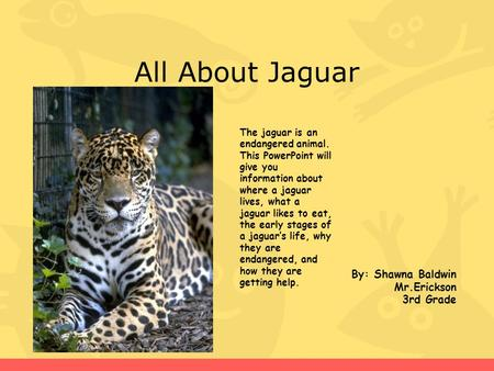 All About Jaguar By: Shawna Baldwin Mr.Erickson 3rd Grade The jaguar is an endangered animal. This PowerPoint will give you information about where a jaguar.