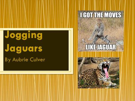 By Aubrie Culver Jaguars are the largest cat in the Americas. They have claws, teeth, blunt snouts, and a flexible body. Male jaguars weigh up to 120.