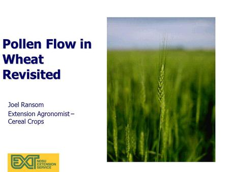 Pollen Flow in Wheat Revisited Joel Ransom Extension Agronomist – Cereal Crops.