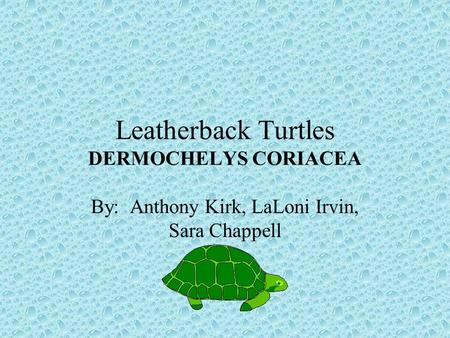 Leatherback Turtles DERMOCHELYS CORIACEA By: Anthony Kirk, LaLoni Irvin, Sara Chappell.