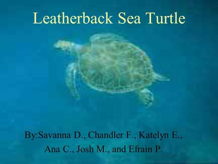 Leatherback Sea Turtle By:Savanna D., Chandler F., Katelyn E., Ana C., Josh M., and Efrain P.