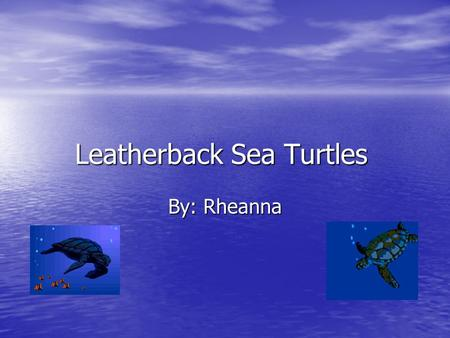 Leatherback Sea Turtles By: Rheanna Habitat Oceans near Africa Atlantic, Pacific, and Indian Oceans Might migrate hundreds or thousands of miles.