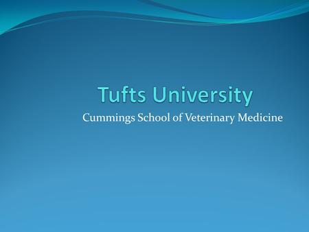 Cummings School of Veterinary Medicine. About… About 80 students a year are accepted 2009 – 2010 academic year for the DVM program is $39,426 Located.
