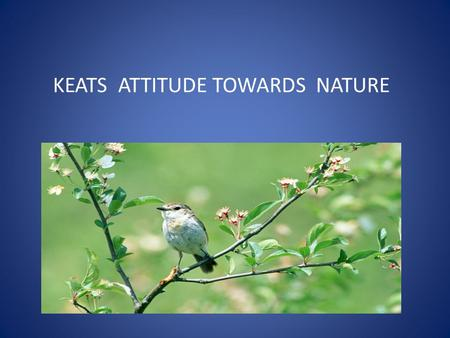 KEATS ATTITUDE TOWARDS NATURE. Keats is one of the greatest lover and admirer of nature. He indulges in the world of natural beauty. Everything in nature.