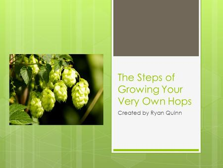The Steps of Growing Your Very Own Hops Created by Ryan Quinn.